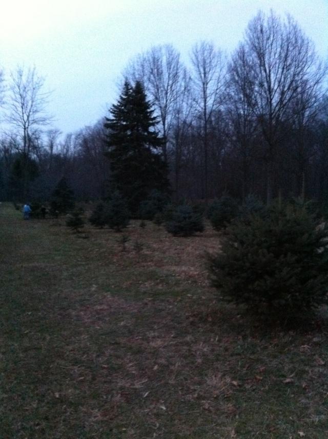 Tree Farm 1