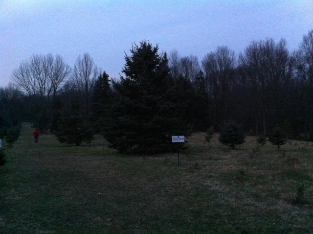 Tree Farm 3
