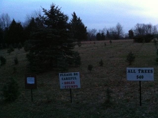 Tree Farm 4